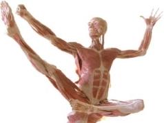 body worlds man